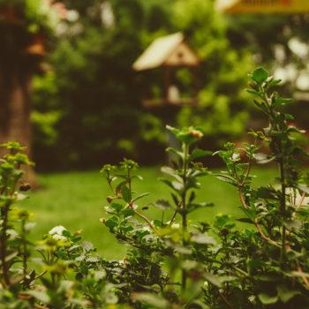 garden thermoigienica 350x350 - Bonus Verde 2018 - ThermoIgienica s.r.l.